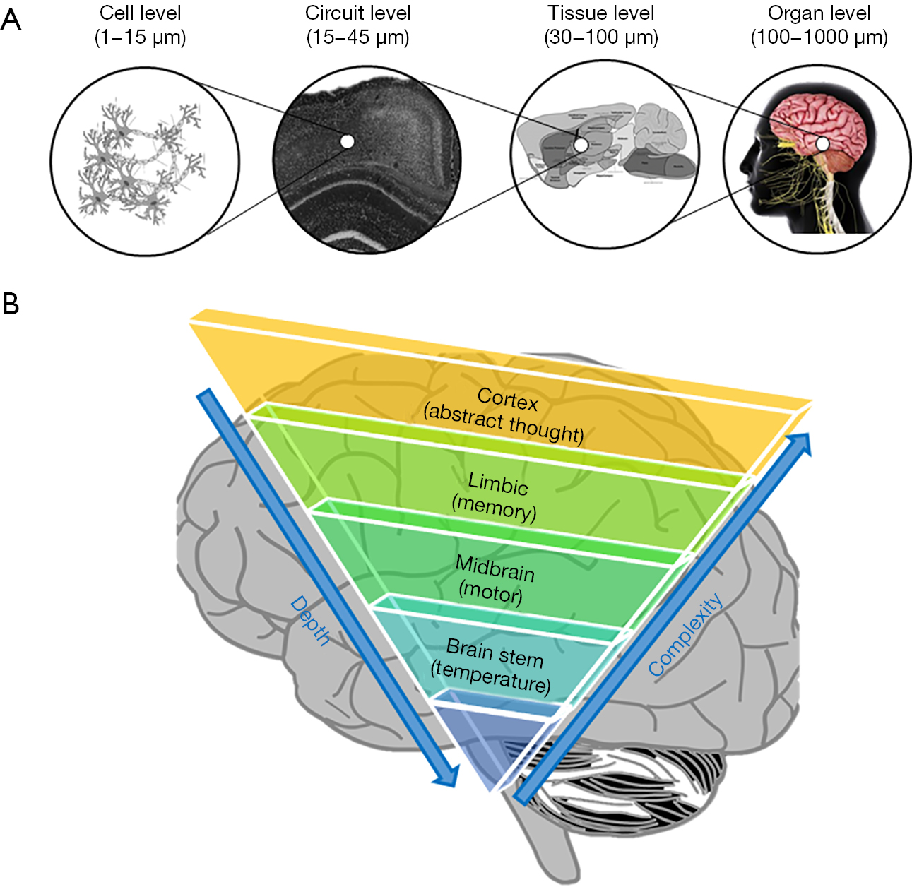 Imaging the aged brain: pertinence and methods - Humayun